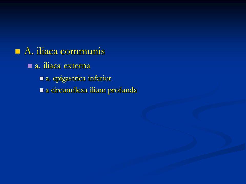 A. iliaca communis A. iliaca communis a. iliaca externa a.