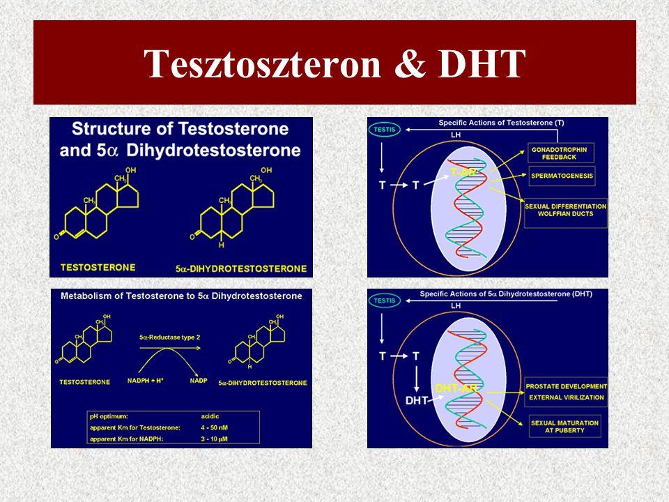 Tesztoszteron & DHT