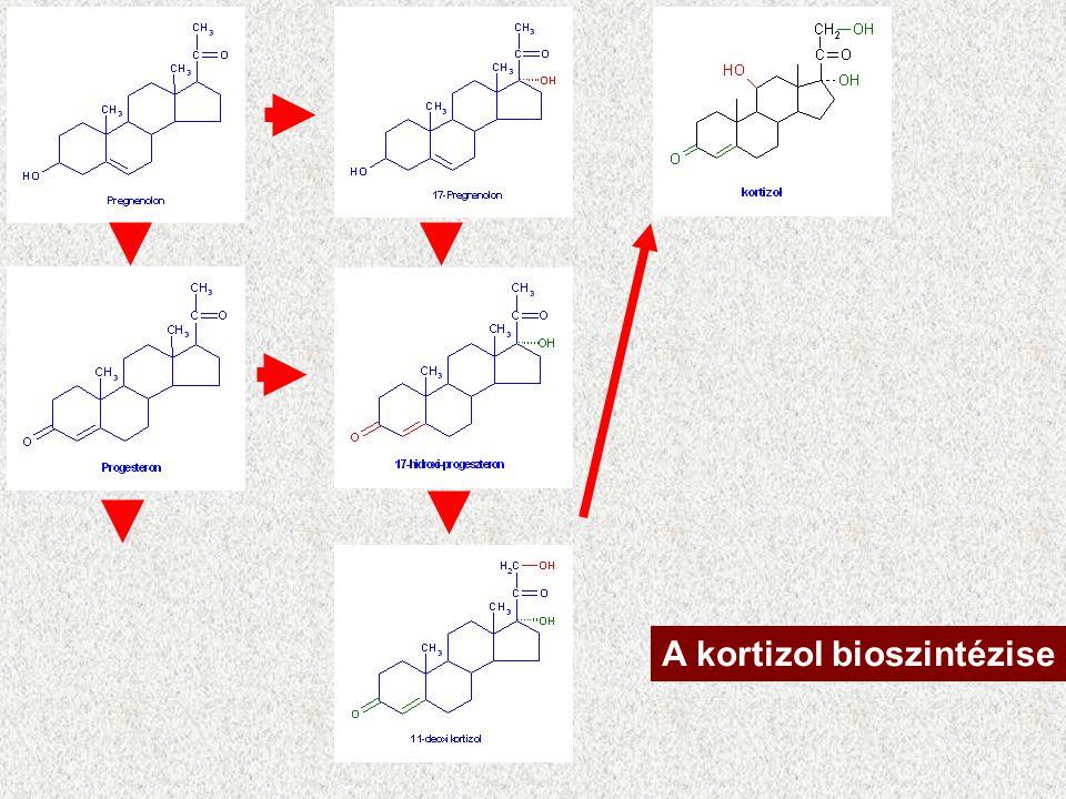 Glükokortikoidok Zona fasciculata, zona reticularis C 21 anyagcsere / stressz Nevük – vér cukor szint emelési képességükből ered. –A májban gluconeoge