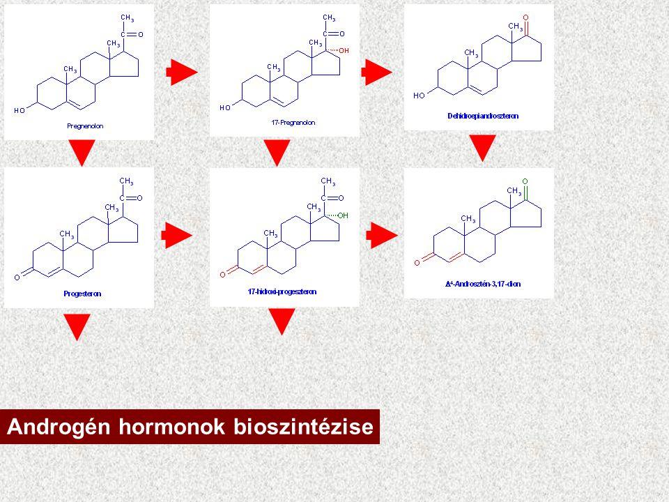 Mellékvese kéreg: androgén hormonok DHEA + szulfát = inaktív Reaktiválódhat Androszténdionná alakulhat Az androsztédion tesztoszteronná alakulhat