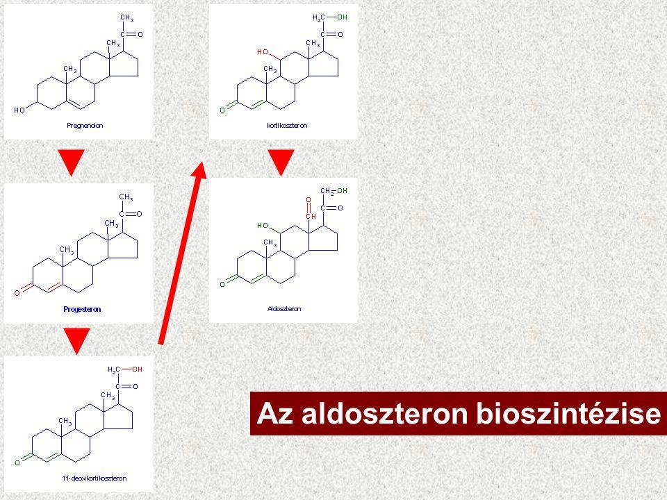 Mineralocorticoidok C 21 Zona glomerulosa Aldoszteron –Vese: Na + reabszorpció –H 2 O – követés, –vér nyomás fenntartása.