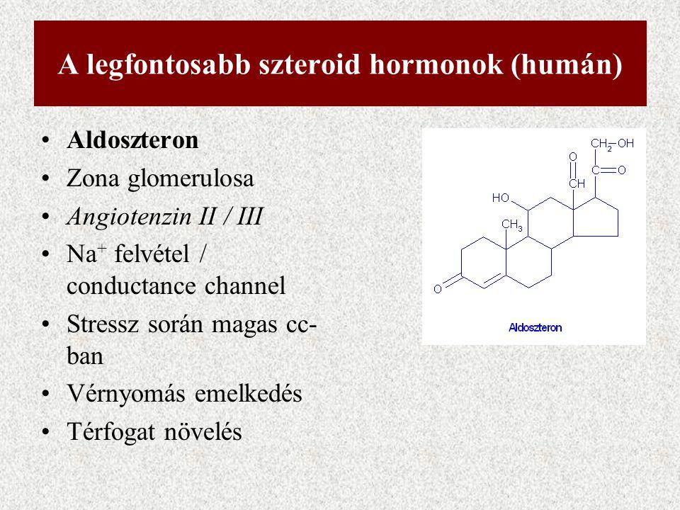A legfontosabb szteroid hormonok (humán) Aldoszteron Zona glomerulosa Angiotenzin II / III Na + felvétel / conductance channel Stressz során magas cc-