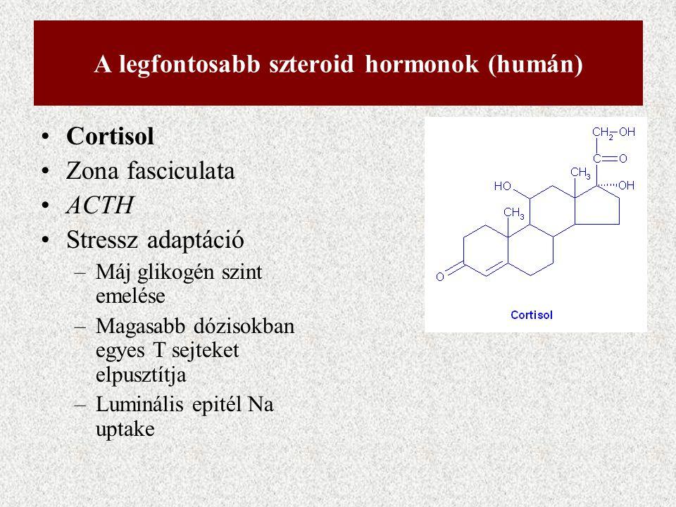 A legfontosabb szteroid hormonok (humán) Cortisol Zona fasciculata ACTH Stressz adaptáció –Máj glikogén szint emelése –Magasabb dózisokban egyes T sej