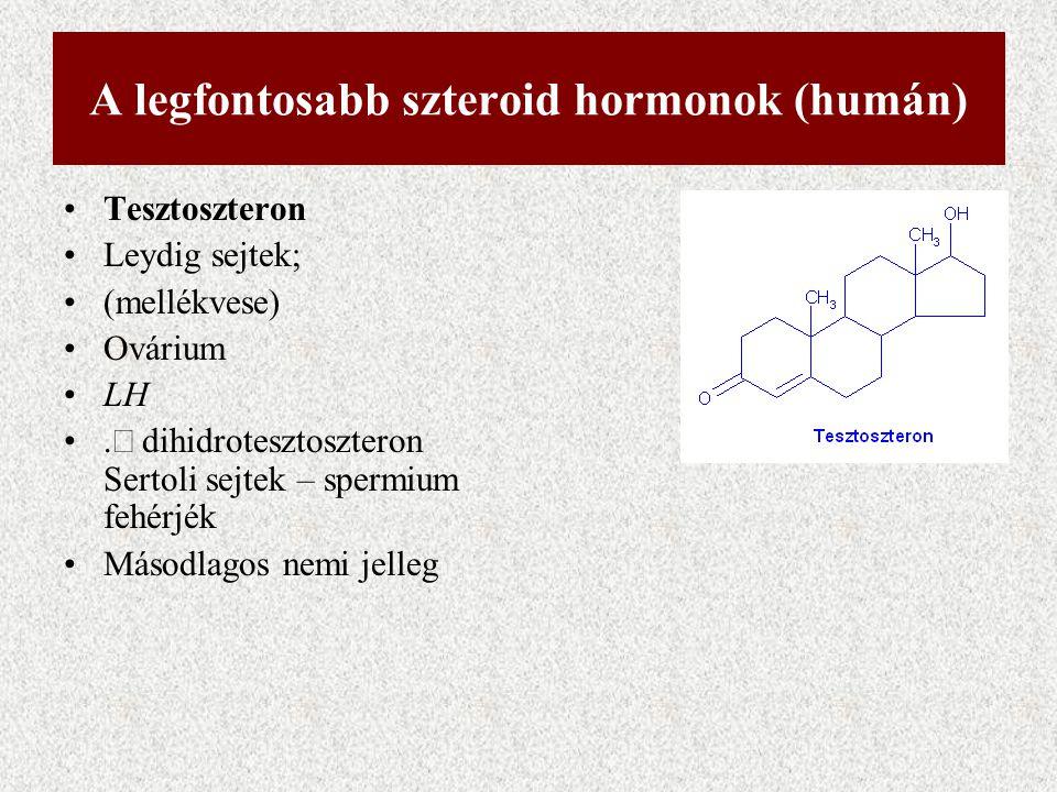 A legfontosabb szteroid hormonok (humán) Tesztoszteron Leydig sejtek; (mellékvese) Ovárium LH.  dihidrotesztoszteron Sertoli sejtek – spermium fehér