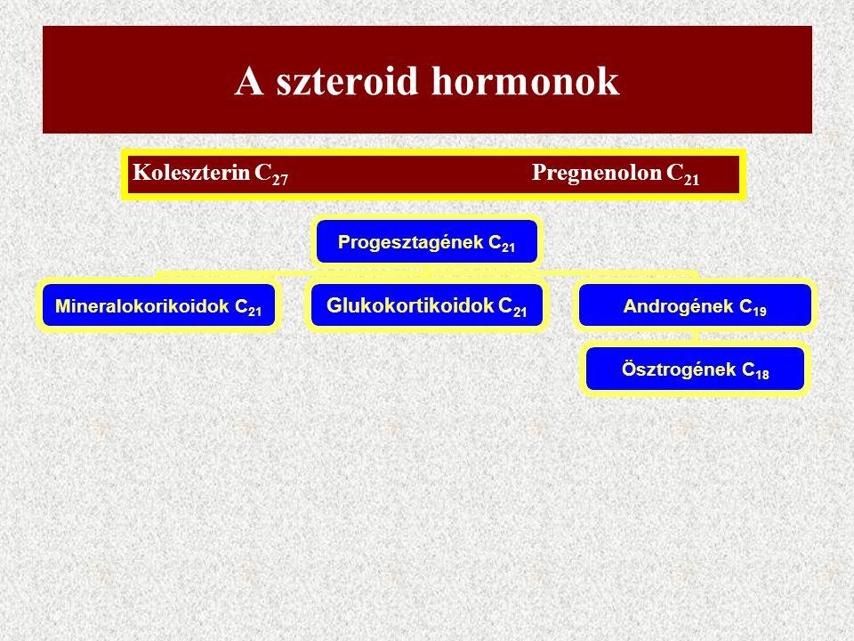 A szteroid hormonok Progesztagének C21 Mineralokorikoidok C21 Glukokortikoidok C21 Androgének C19 Ösztrogének C18 Koleszterin C 27 Pregnenolon C 21