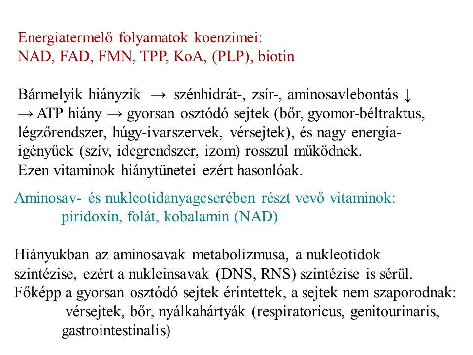 Aminosav- és nukleotidanyagcserében részt vevő vitaminok: piridoxin, folát, kobalamin (NAD) Hiányukban az aminosavak metabolizmusa, a nukleotidok szin