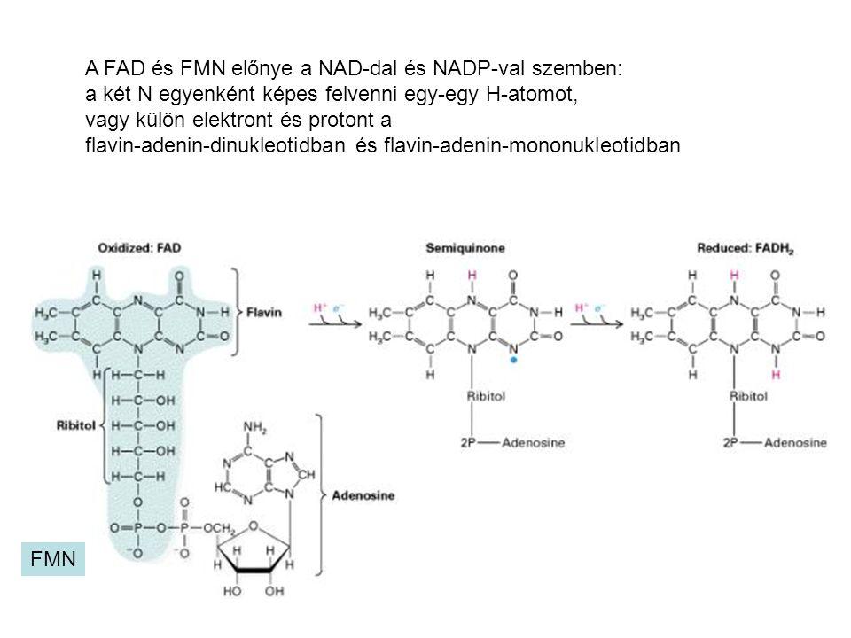 FMN A FAD és FMN előnye a NAD-dal és NADP-val szemben: a két N egyenként képes felvenni egy-egy H-atomot, vagy külön elektront és protont a flavin-ade