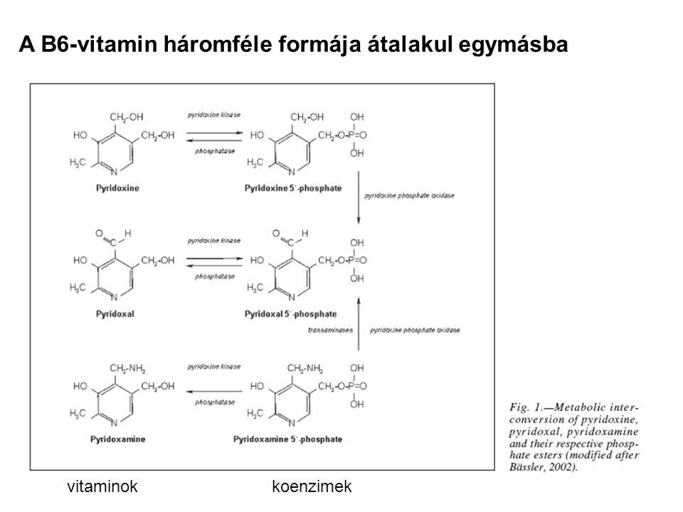 A B6-vitamin háromféle formája átalakul egymásba vitaminokkoenzimek
