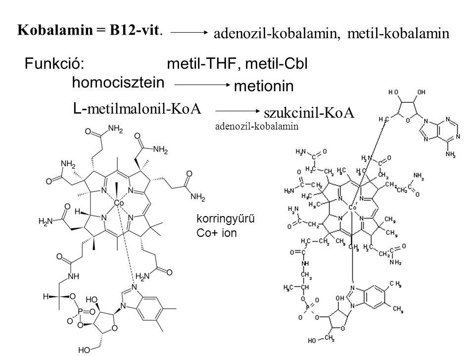 Kobalamin = B12-vit. adenozil-kobalamin, metil-kobalamin Funkció:metil-THF, metil-Cbl homocisztein metionin L- metilmalonil-KoA szukcinil-KoA adenozil