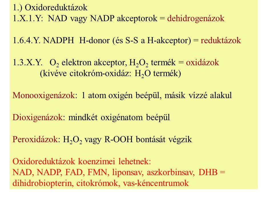 1.) Oxidoreduktázok 1.X.1.Y: NAD vagy NADP akceptorok = dehidrogenázok 1.6.4.Y. NADPH H-donor (és S-S a H-akceptor) = reduktázok 1.3.X.Y. O 2 elektron
