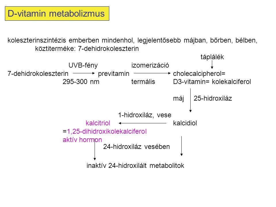 D-vitamin metabolizmus koleszterinszintézis emberben mindenhol, legjelentősebb májban, bőrben, bélben, köztiterméke: 7-dehidrokoleszterin táplálék UVB
