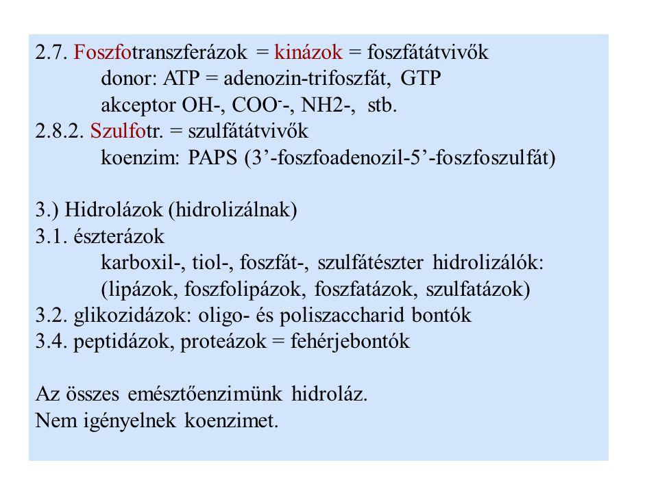 2.7. Foszfotranszferázok = kinázok = foszfátátvivők donor: ATP = adenozin-trifoszfát, GTP akceptor OH-, COO - -, NH2-, stb. 2.8.2. Szulfotr. = szulfát