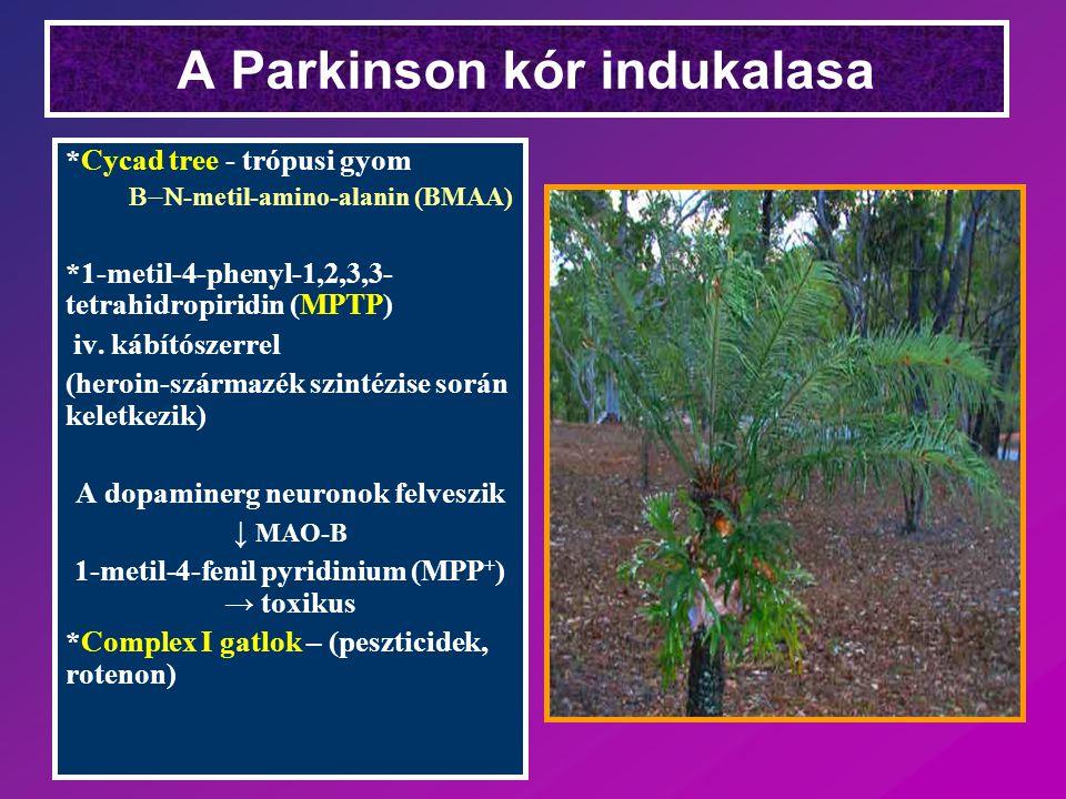 A Parkinson kór indukalasa *Cycad tree - trópusi gyom  -metil-amino-alanin (BMAA) *1-metil-4-phenyl-1,2,3,3- tetrahidropiridin (MPTP) iv. kábítósze