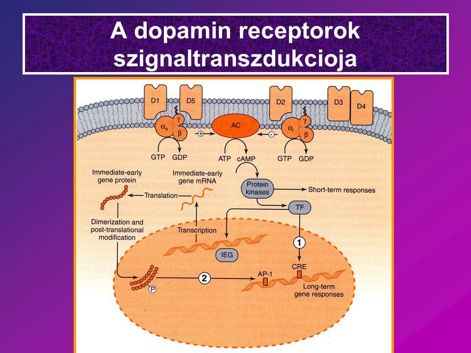 A dopamin receptorok szignaltranszdukcioja