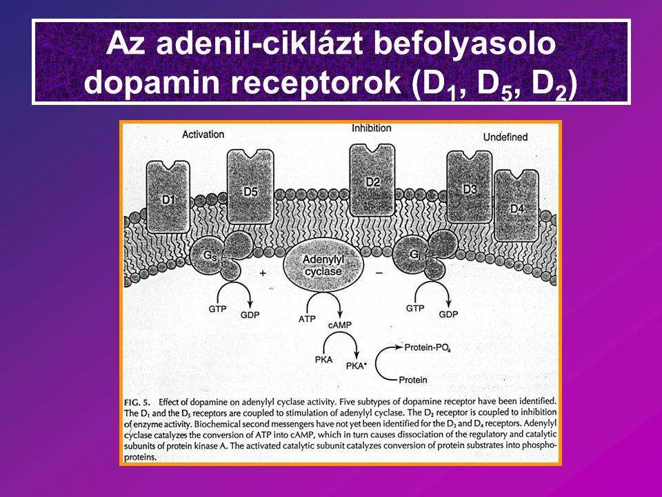 Az adenil-ciklázt befolyasolo dopamin receptorok (D 1, D 5, D 2 )