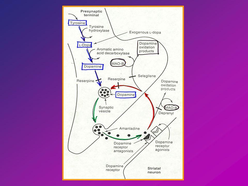 Dopamin metabolitok Agytörzsi magvak Limbikus kéreg Nigro-striatalis pályák.