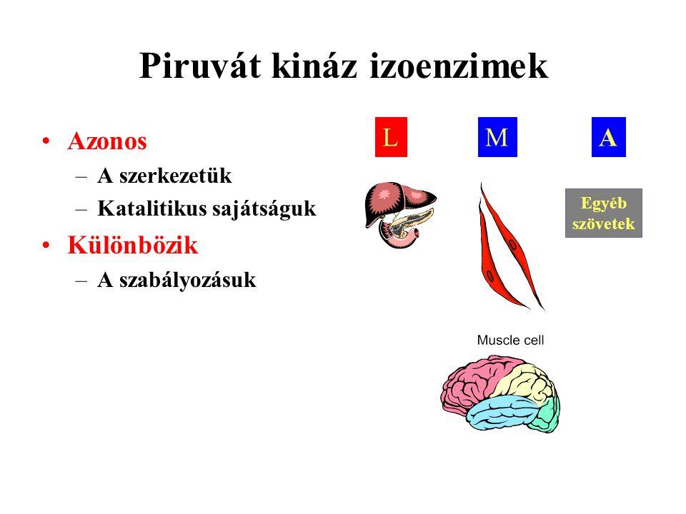 Piruvát kináz izoenzimek Azonos –A szerkezetük –Katalitikus sajátságuk Különbözik –A szabályozásuk LMA Egyéb szövetek