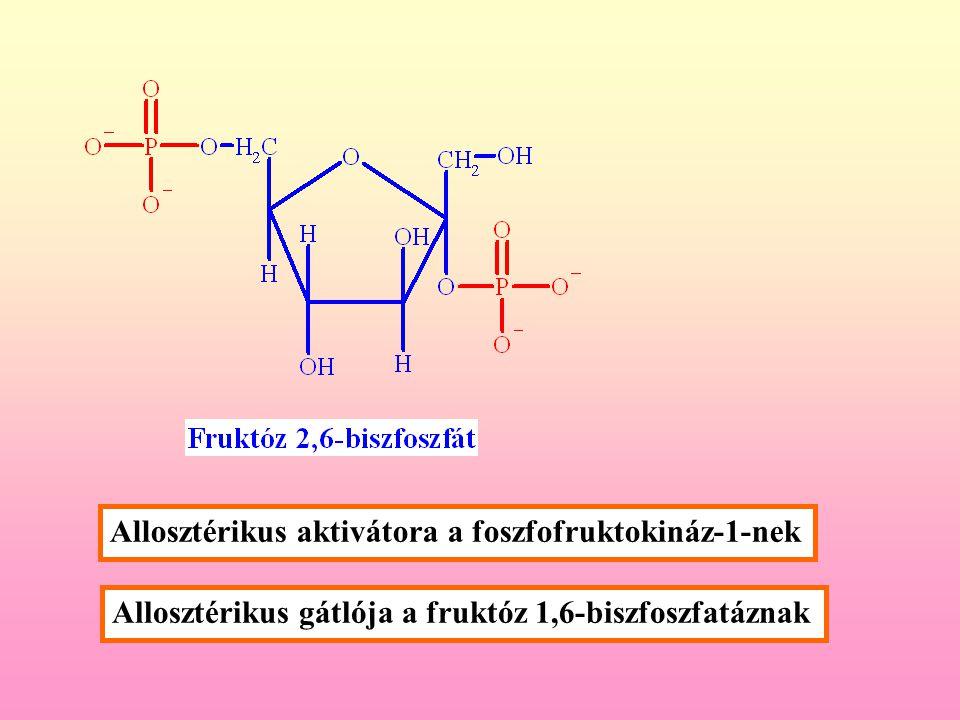 A foszfofruktokinaz regulacioja fruktóz-2,6-biszfoszfáttal 0 0,1  M 1  M F-2,6-BP [fruktóz-6-foszfát] (  M) 5 Enzim aktivitas [ATP] (mM) 0 0,1 uM 1  M F-2,6-BP 1 5