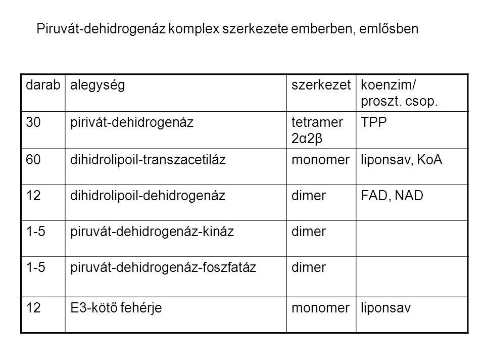 -ketontestek -FA oxidáció -zsírdús diéta -diabetes -éhezés induct.