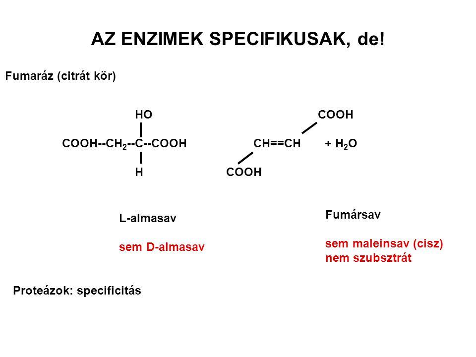 ÁLTALÁNOS TULAJDONSÁGOK Fehérjék: Molekula tömeg 1.5x10 4 -10 6 Denaturálhatók egy vagy több polipeptidlánc A reakciósebességet növelik, de a reakció