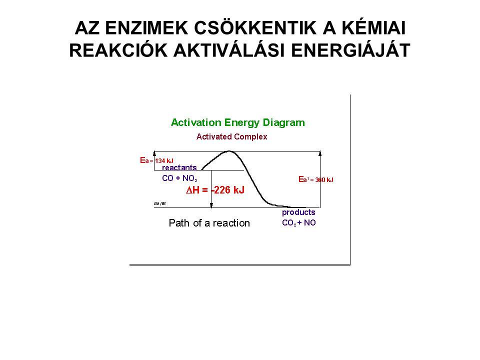 KATALÍZIS átmeneti komplex e és szubsztrát(ok) között (kimutatható) AKTÍV CENTRUM: ENZIM KONFORMÁCIÓ ALAKÍTJA KI DE! R- OLDALLÁNCOK SPECIFIKUS MÓDON E