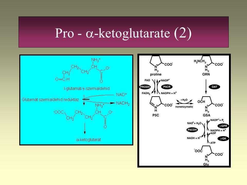 Pro -  -ketoglutarate (1)