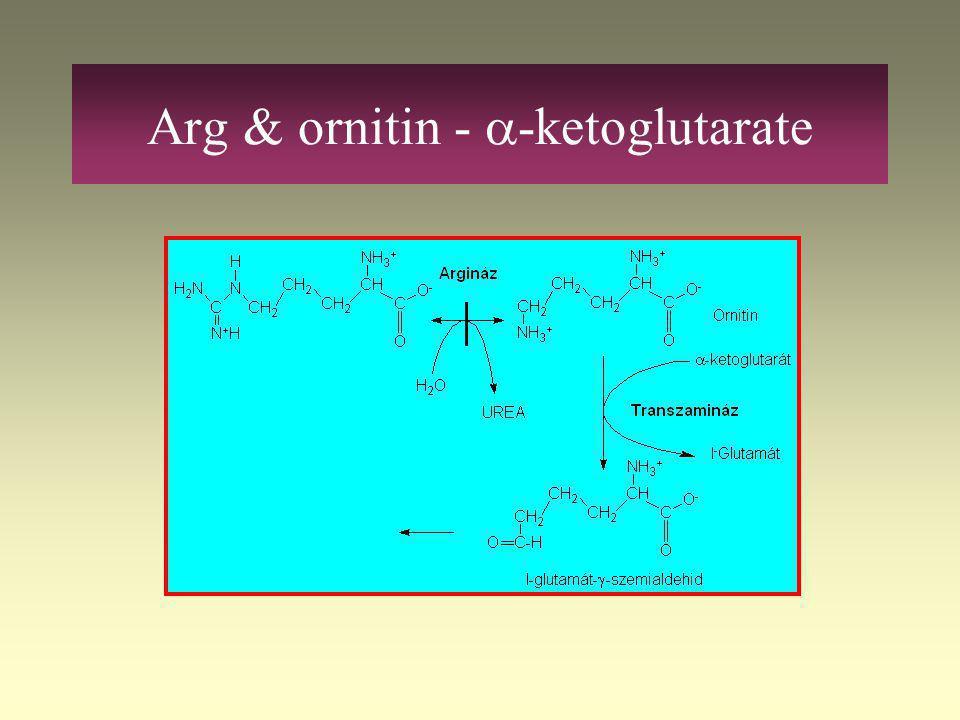 Pro -  -ketoglutarate 2 autosomal recessive hyperprolinemia –Hyperprolinaemia I: prolin-dehydrogense (Hz – symptoms of hyperprolinaemia) –Hyperprolin