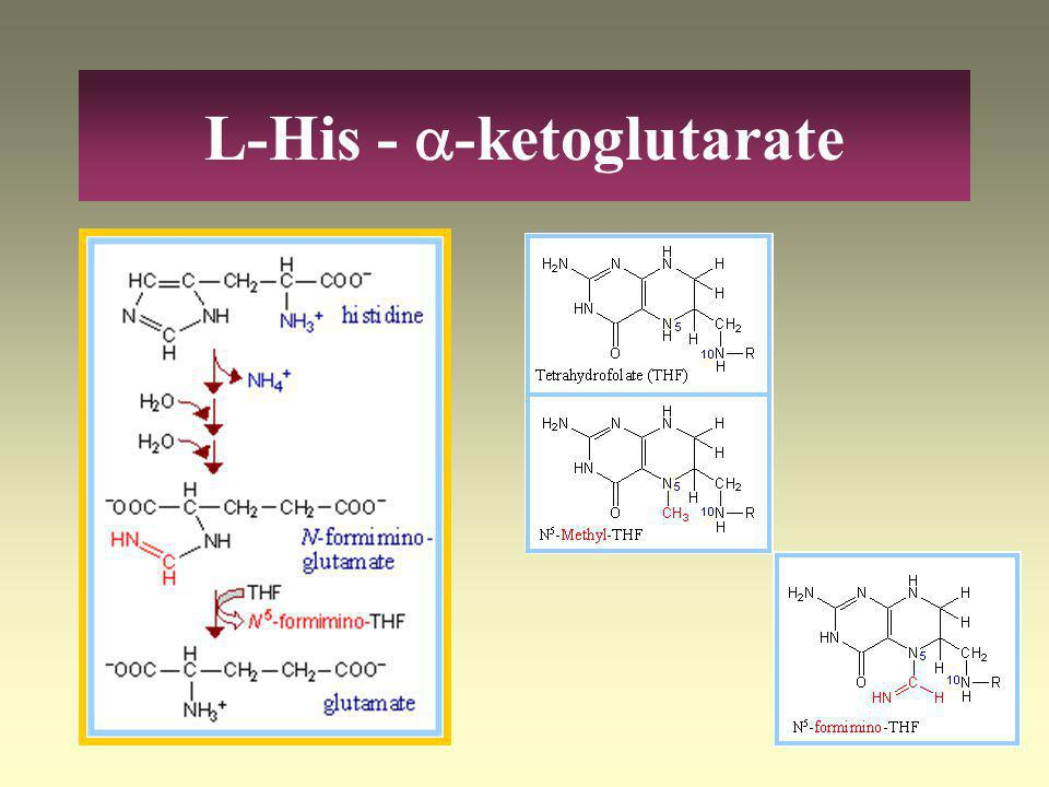 L-His -  -ketoglutarate L-His HistidaseHistidinaemia Urokanate UrokanaseUrokaninic acidaemia 4-imidazolon-5-propionate ~ dehidrogenase F(iglu) Glutam