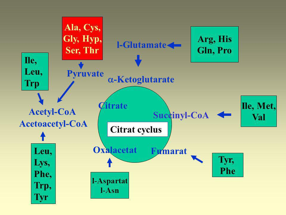 Histininaemia –Histidase enzyme defect: 1:11500 –[His] blood, urine is elevated –Typical impediment in speech, benign syndrome Urokaninic aciduria –Au