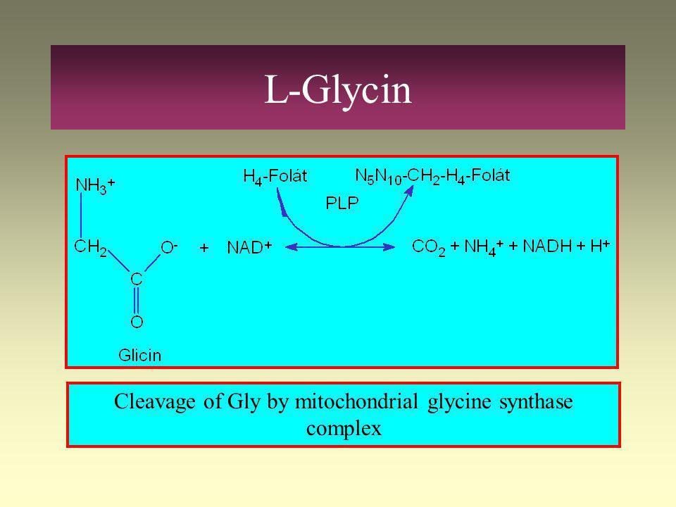 L-Glycin Serin hydroxymethyl transferase