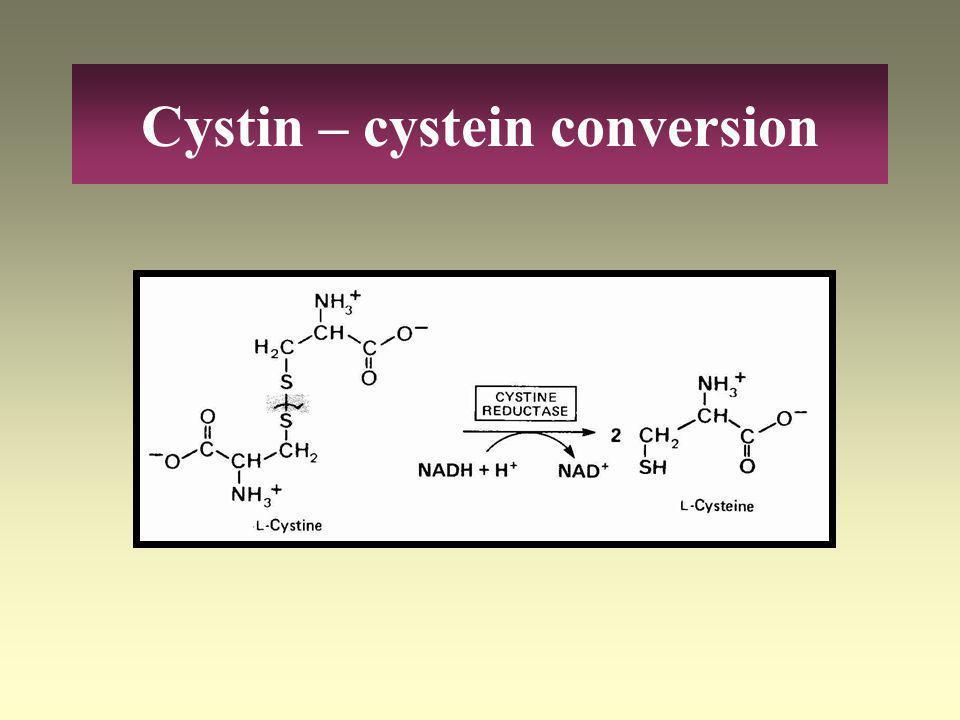 Amino acids - pyruvate L-Threonin L-Glycin L-Serin Piruvat Acetyl-CoA L-Alanin L-Cysteine Cystine
