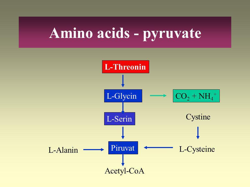 Cisztinuria (cisztin – lizin uria) Cisztinózis Homociszteinuriák A kén tartalmú aminosavak lebontásának rendellenességei