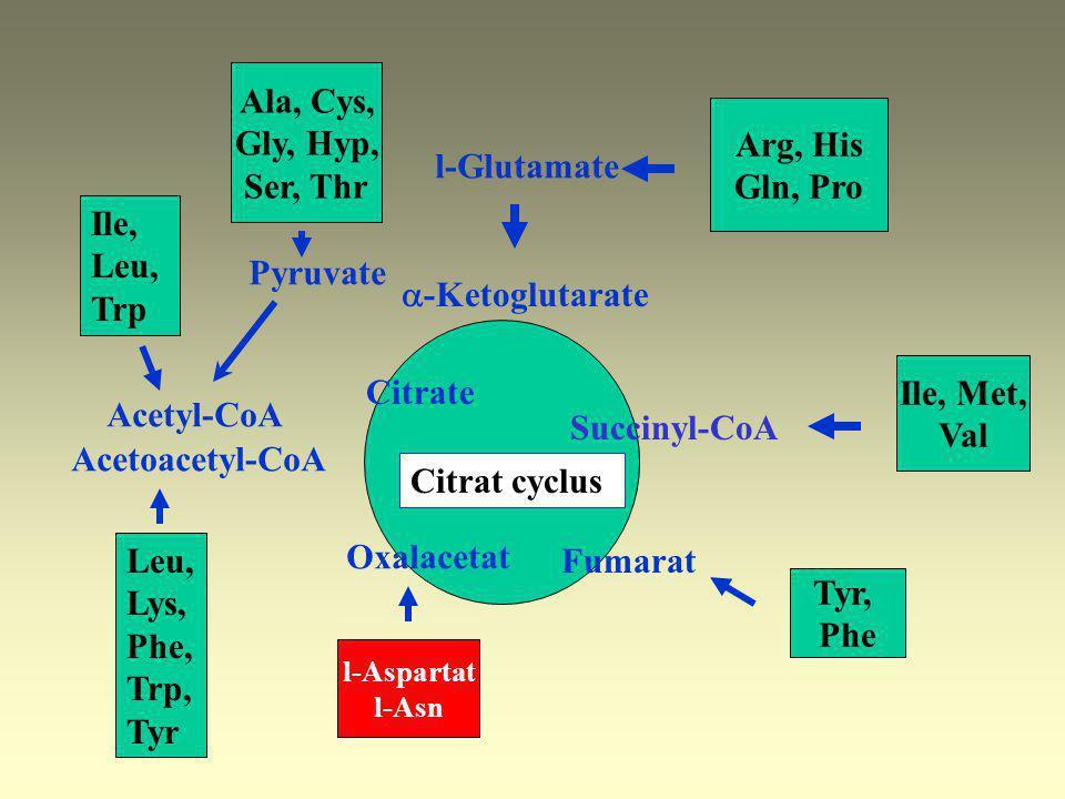 Catabolism of carbon skeleton Amphybolic intermedier Glucoplastic 13 ketoplastic 1 Gluco- and ketoplastic 5 Ala, Arg, Asp, Cys, Glu, Gly, His, Hyp, Me