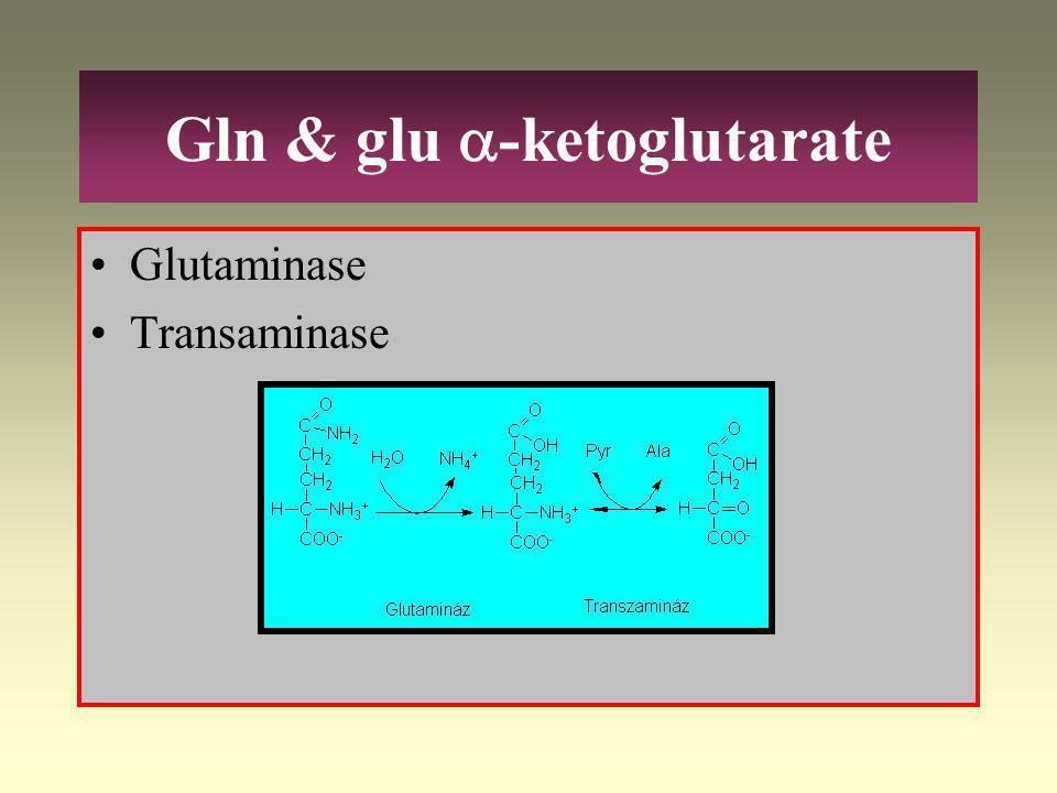  -Ketoglutarate Succinyl-CoA Fumarat l-Glutamate Arg, His Gln, Pro Ile, Met, Val Tyr, Phe Citrat cyclus Oxalacetat l-Aspartat l-Asn Citrate Acetyl-Co