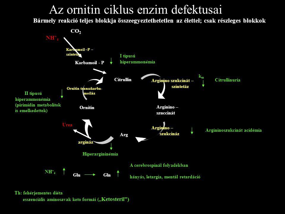 Az ornitin ciklus enzim defektusai Bármely reakció teljes blokkja összeegyeztethetetlen az élettel; csak részleges blokkok Citrullin Arginino – szucci