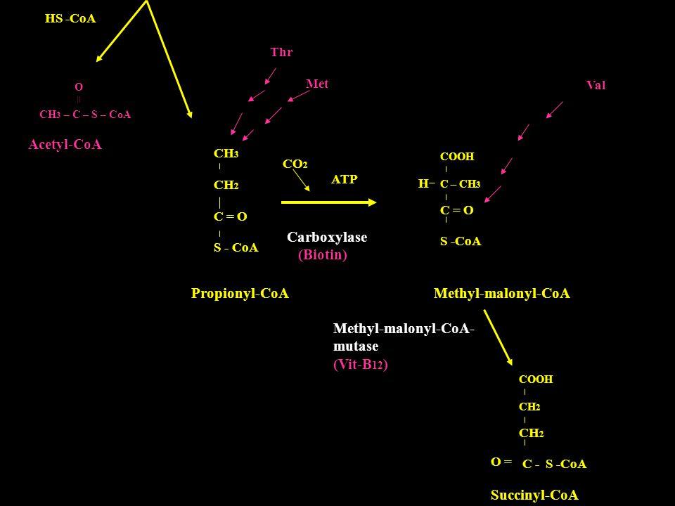 HS -CoA CH 3 – C – S – CoA Acetyl-CoA CH 3 CH 2 C = O S - CoA COOH C – CH 3 C = O S -CoA H CO 2 ATP Carboxylase (Biotin) Thr Met Val Propionyl-CoA Met