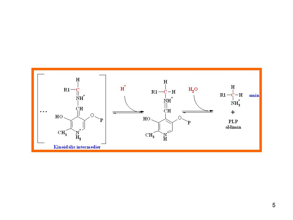 16 Mechanism of ornithine decarboxylase