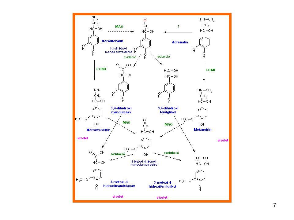 8 Neurotransmitter biosynthesis GABA
