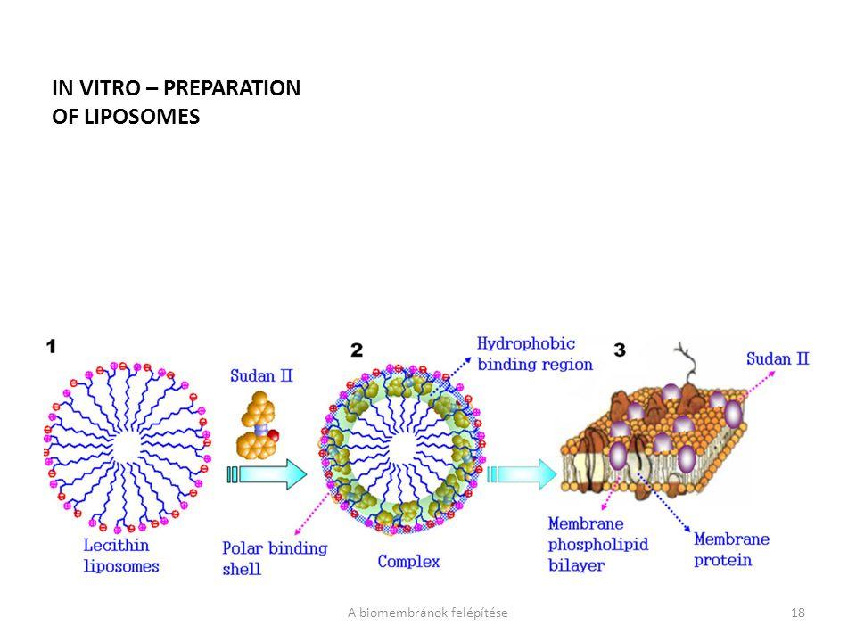 IN VITRO – PREPARATION OF LIPOSOMES A biomembránok felépítése18