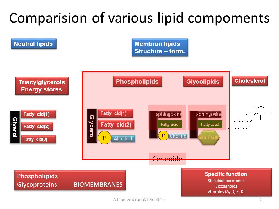 Comparision of various lipid compoments A biomembránok felépítése5 Neutral lipids Membran lipids Structure – form.