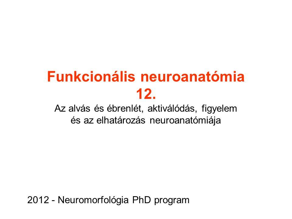 Funkcionális neuroanatómia 12. Az alvás és ébrenlét, aktiválódás, figyelem és az elhatározás neuroanatómiája 2012 - Neuromorfológia PhD program