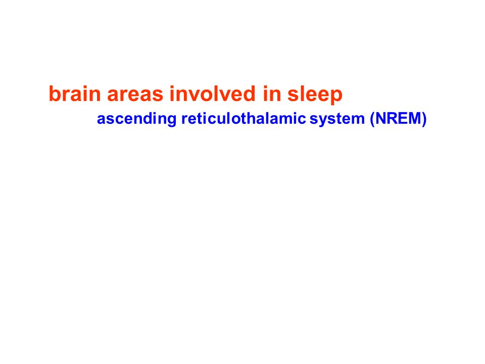 brain areas involved in sleep ascending reticulothalamic system (NREM)