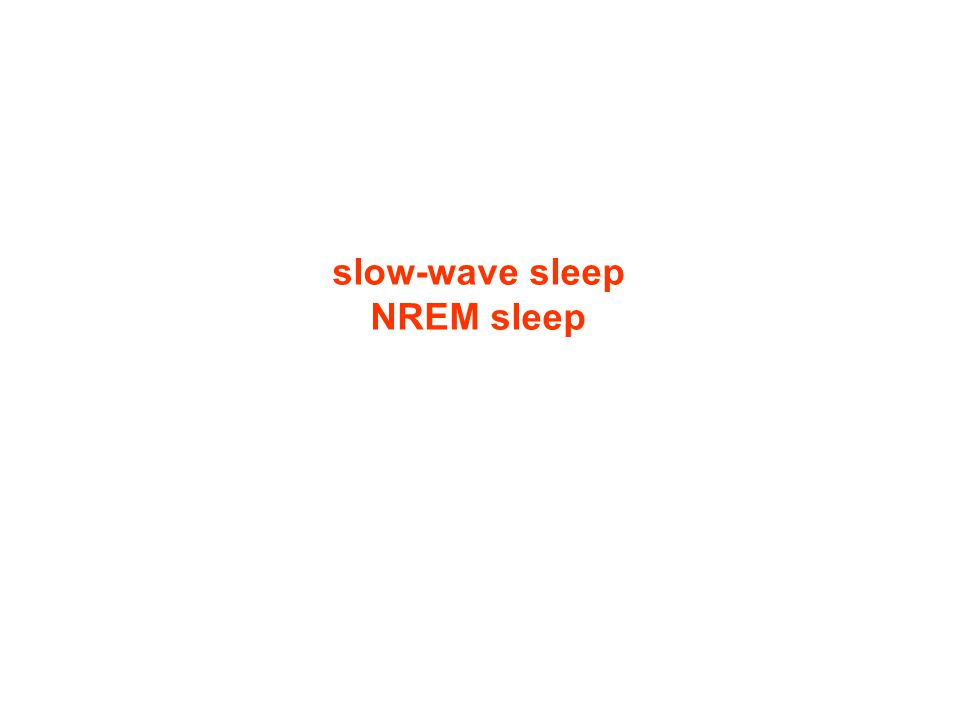 slow-wave sleep NREM sleep