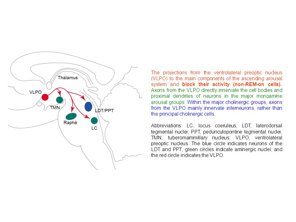 The projections from the ventrolateral preoptic nucleus (VLPO) to the main components of the ascending arousal system and block their activity (non-RE