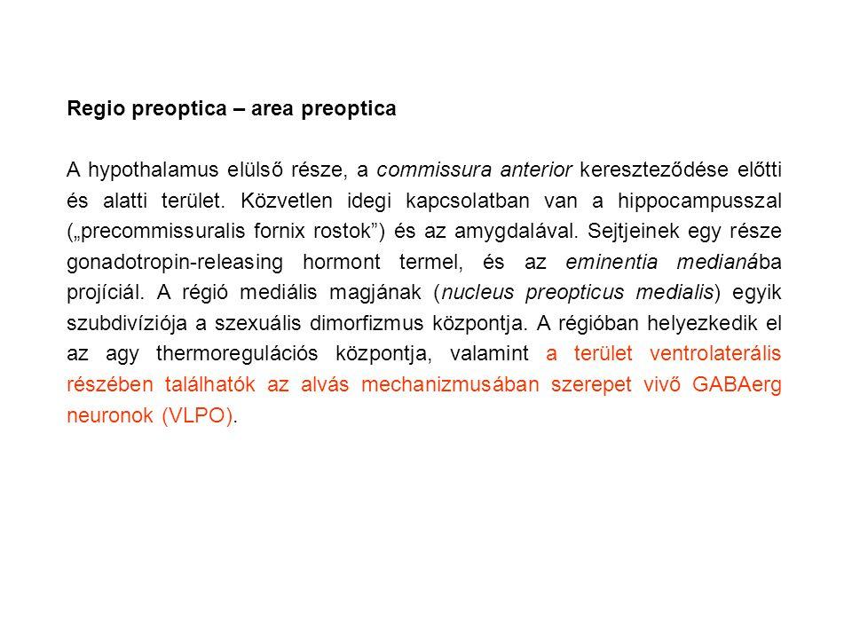 Regio preoptica – area preoptica A hypothalamus elülső része, a commissura anterior kereszteződése előtti és alatti terület. Közvetlen idegi kapcsolat