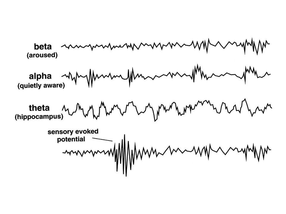 brain areas involved in sleep ascending reticulothalamic system (NREM) pontine-geniculo-occipital (PGO) axis (REM) circadian rhythm