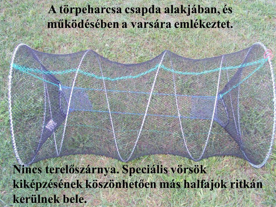 A törpeharcsa szelektív halászatának lehetőségei: 4.) A horgászegyesület tagjai számára lehetőséget biztosítani az ellenőrzött és szabályozott törpeharcsa csapda megvásárolására, és használatára.