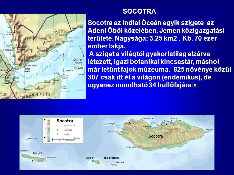 SOCOTRA Socotra az Indiai Óceán egyik szigete az Adeni Öböl közelében, Jemen közigazgatási területe.