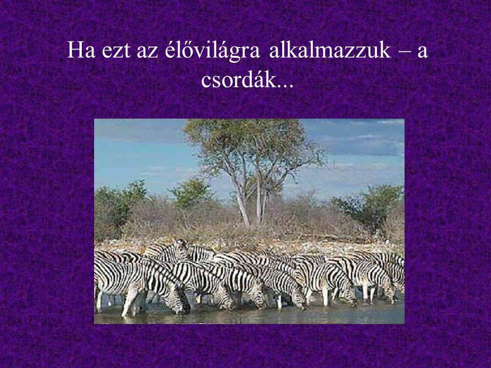 Ha ezt az élővilágra alkalmazzuk – a csordák...