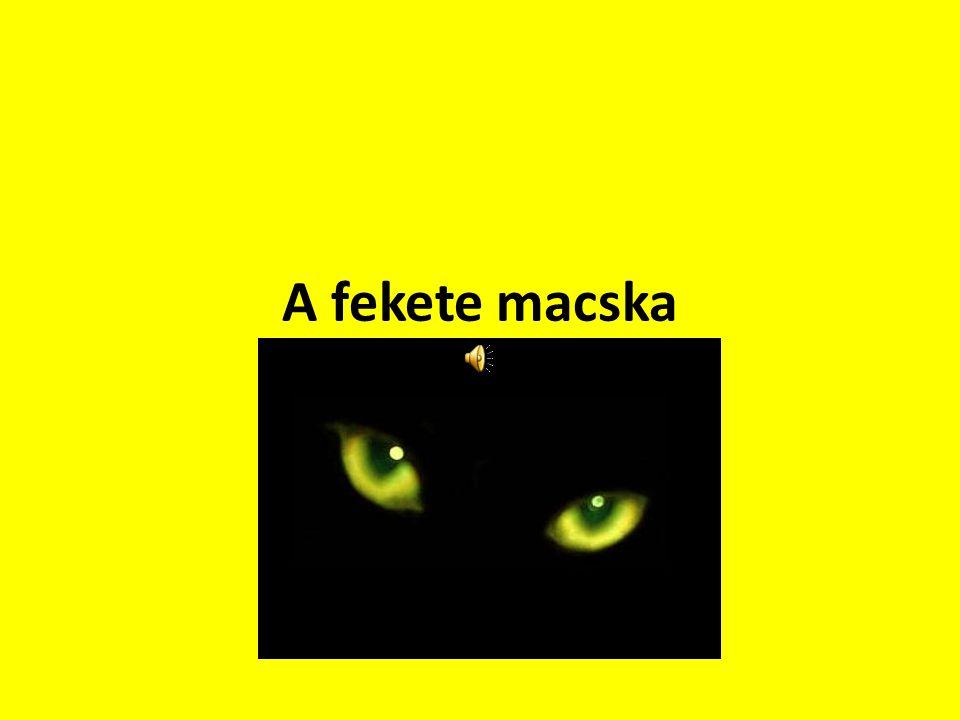 A fekete macska gyógyító génje  A fekete macska nem balszerencsét hozhat, hanem egészséget - állítják amerikai kutatók.